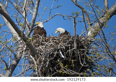 eagle nest sex personals Maine bald eagles mating march 3, 2007 this feature is not available right now please try again later.