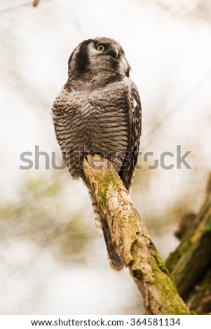adult beautiful owl sitting on a branch