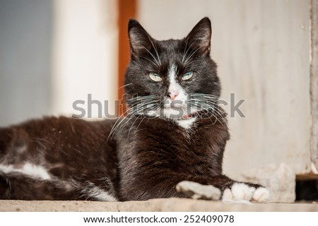 Adult black and white cat lying on the porch - stock photo