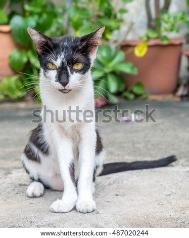 Adult black and white cat sit on concrete outdoor floor, selective focus on its eye