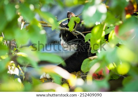 Adult black and white cat sitting on the tree in summer - stock photo