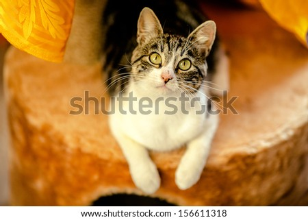 Adult cat looks in the photo camera - stock photo
