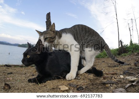 Animal Intercourse Stock Images Royalty Free Images