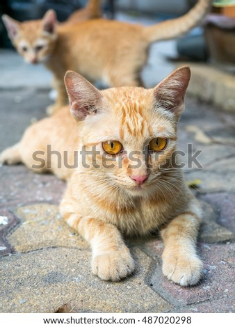 Adult golden brown cat lay on outdoor concrete floor with her small kitten in background, selective focus on its eye
