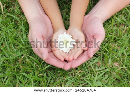 Adult hands holding kid hands with white flower - stock photo