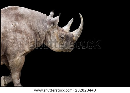 Adult rhinoceros isolated on a black background - stock photo