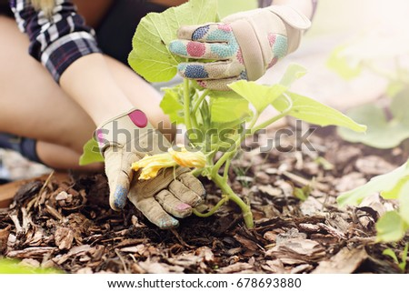 Adult woman picking vegetables from garden
