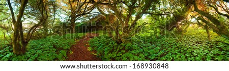 Adventure Path Through The Wilderness during the day. Photograph was shot at Chetco Point Park, Brookings, Oregon, United States. - stock photo