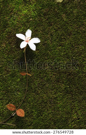 Aegiceras, dead leaves for adv or others purpose use - stock photo