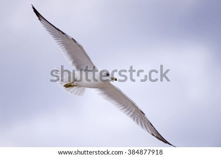 Aerial Ballet of Seagull