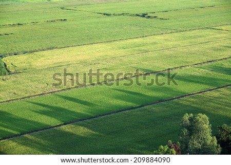 aerial scenic paddy field