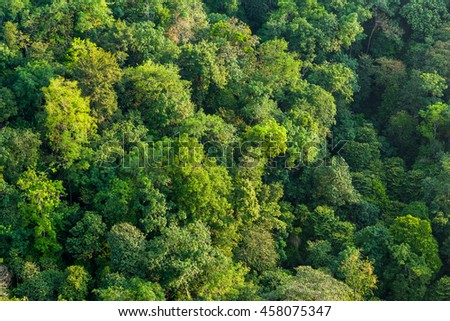 Aerial shot of a lush tropical forest 2