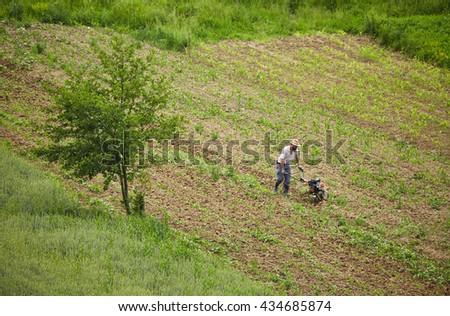 Aerial view of a farmer weeding in a corn field with a motorized tiller