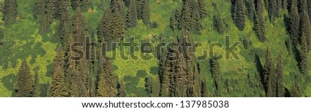 Aerial view of a forest in Washington state - stock photo
