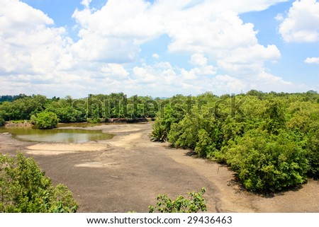 Aerial view of a mangrove forest during low tide - stock photo