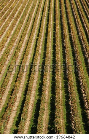 aerial view of a vineyard making a pattern
