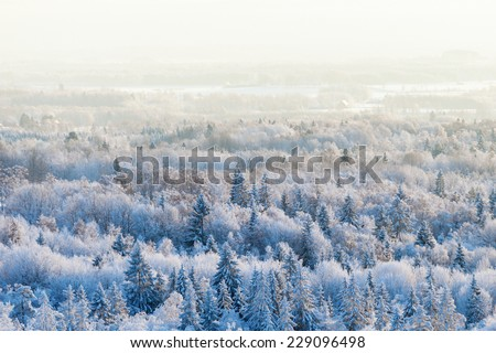 Aerial view of a winter woods Snowy tree branch in a view of the winter forest  - stock photo