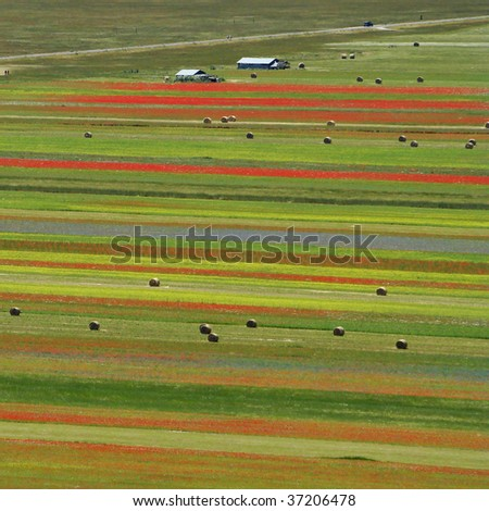 aerial view of colorful fields in Italy, Castelluccio di Norcia, Piano Grande in Sibillini Mountains, Europe - stock photo