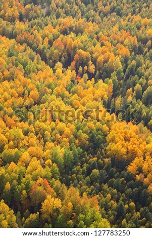 Aerial view of forest plain during a autumn day. - stock photo