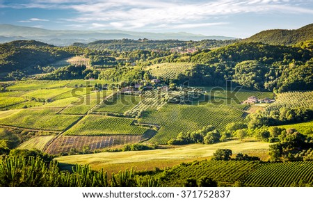 Aerial view of green vineyards in Tuscany, Italy