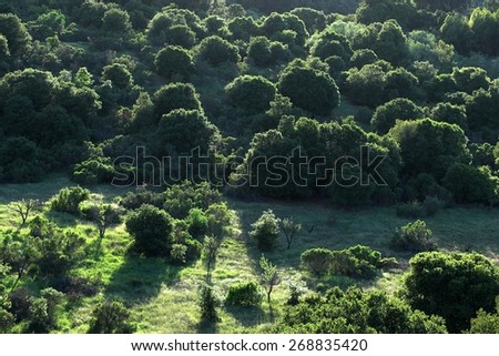 Aerial View Of Hillside Wild Land in a Northern California Nature Preserve - The setting sun painted the round shaped trees with amazing beautiful lighted edges in this green landscape. - stock photo