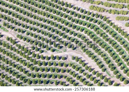 Aerial view of orange grove in Ventura County, Ojai, California - stock photo