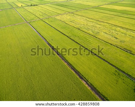 aerial view of paddy field
