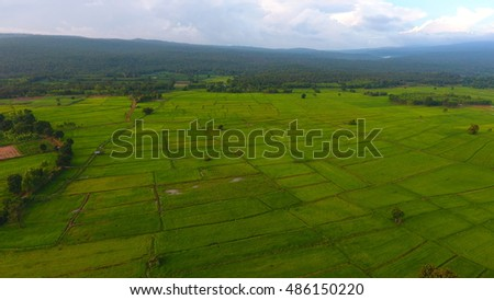 Aerial view of paddy field in Thailand.