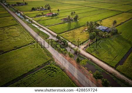aerial view of paddy field with farmers housing - stock photo
