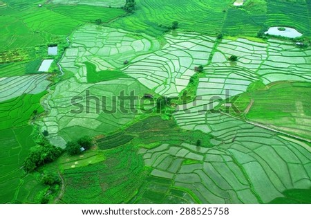 Aerial view of paddy fields in a rainy season - stock photo