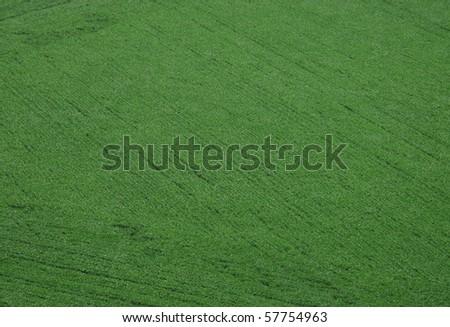 Aerial view of soybeans - stock photo