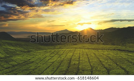 Aerial view of tea plantation with sunrise view in the morning, shot