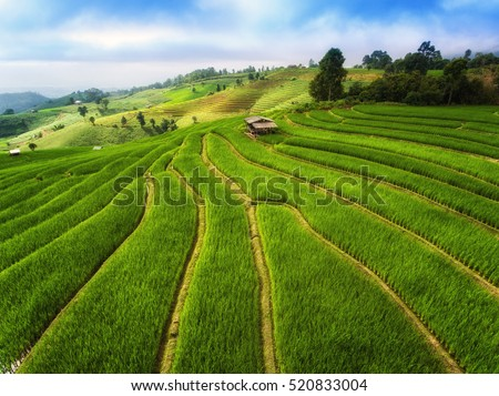 Terrace farming stock images royalty free images for Kids on the terrace