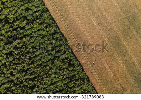 aerial view of the forest and  harvest field in Poland