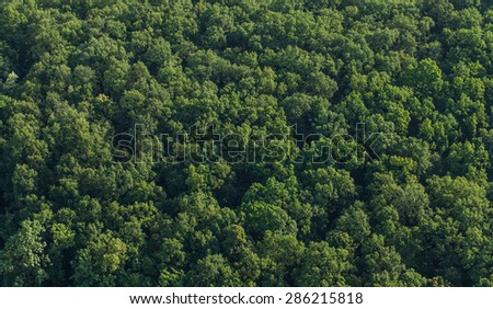 aerial view of the forest in Poland - stock photo