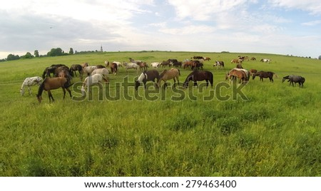 Aerial view of the group of horses eating grass in a field on the horizon. - stock photo