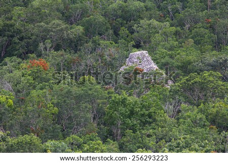 Aerial view of the top of a Mayan pyramid reacing forest canopy at Coba