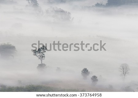 Aerial view of trees in morning fog  (nature, landscape)