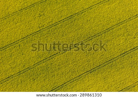 aerial view of yellow harvest fields  in Poland - stock photo