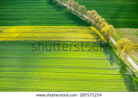 Aerial view on the large colza field - stock photo
