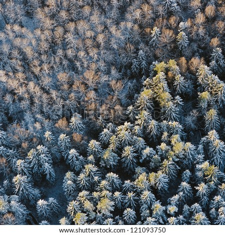 aerial view over snowy trees
