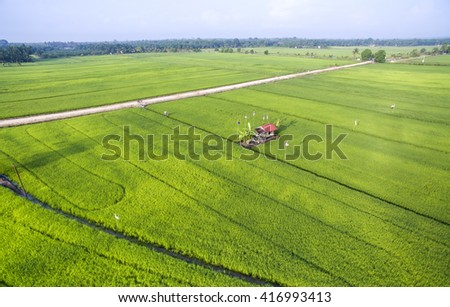 aerial view paddy field growth up at malacca malaysia