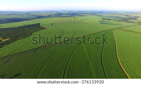 Aerial view soya bean field in Sao Paulo - Brazil - stock photo