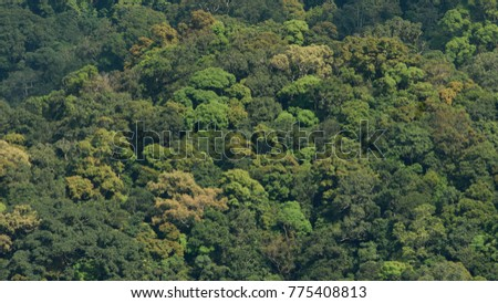 Aerial view tropical forest canopy background & Aerial View Tropical Forest Canopy Background Stock Photo ...