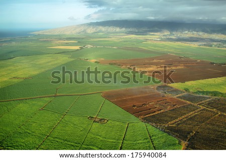 Aerial views of sugarcane crops in Maui, Hawaii.