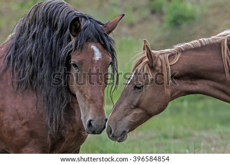 affection to each other - stock photo
