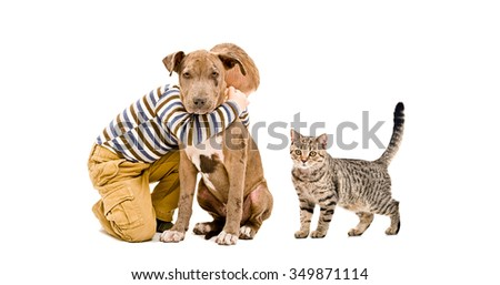Affectionate boy, pit bull puppy and a cat Scottish Straight, isolated on white background - stock photo