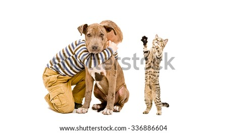 Affectionate boy, pit bull puppy and a playful kitten Scottish Straight isolated on white background - stock photo