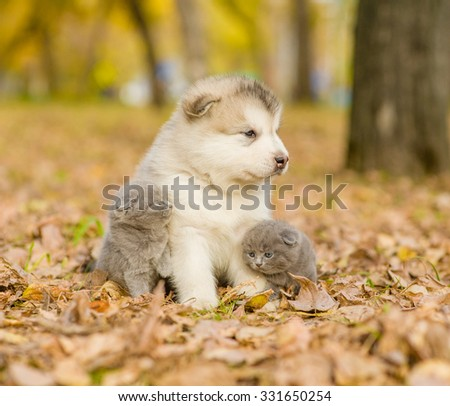Affectionate cute kittens and alaskan malamute puppy in autumn park - stock photo