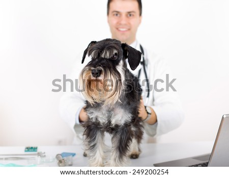 Afraid dog on veterinary examination standing on table